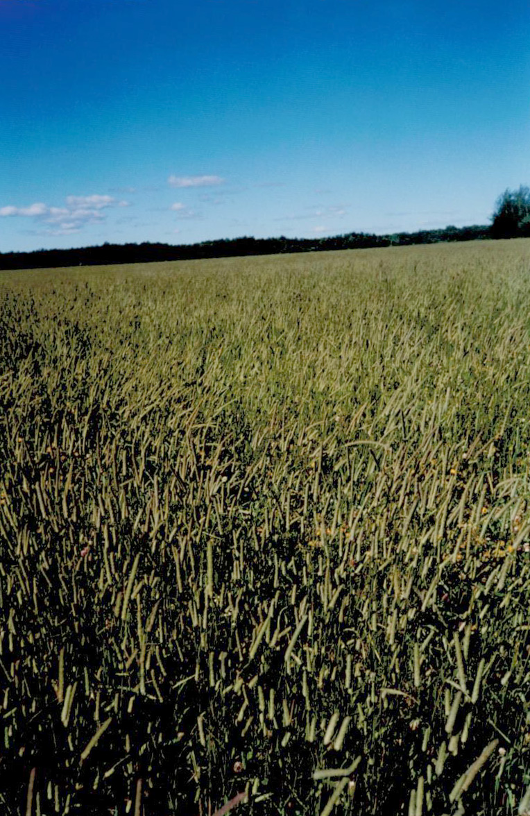 Reclamation Seed Cont Big Sky Wholesale Seedsbig Sky Wholesale